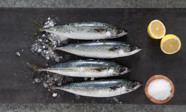 Cavala, um peixe azul saudável e saboroso