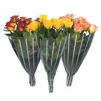 Rosas S.valentim