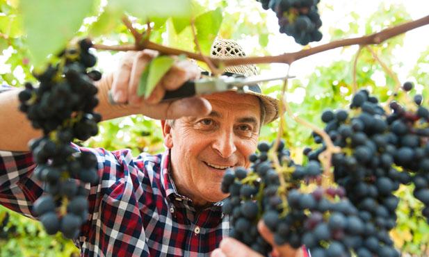 Uma viagem pelas regiões vínicas