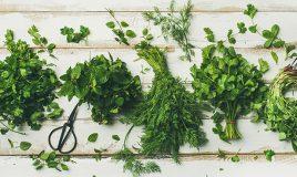 Como conservar ervas aromáticas